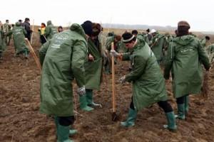 Plantare copaci Porsche România la Borcea