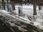 Gard-prea-inalt-in-oras