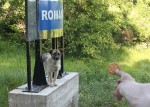 Romania-si-catelul-trist