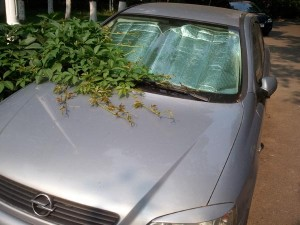 Opel Astra embraced by nature